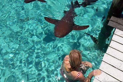 The nurse sharks of the Bahamas