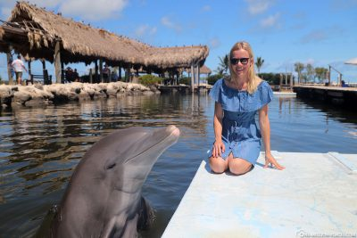 Interaktion mit einem Delfin im Dolphin Research Center