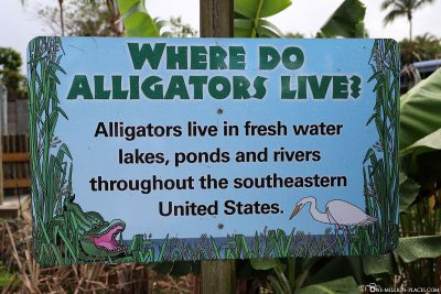 Information board about alligators