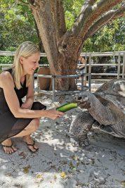 Feeding the giant tortoises
