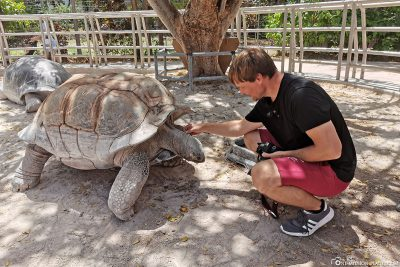 Up Close with the giant tortoises