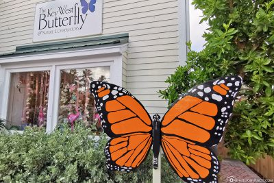 Der Butterfly Garden in Key West