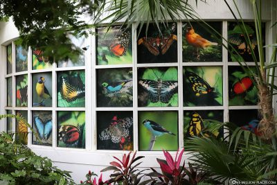 Overview of the butterflies