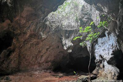 Hamilton's Cave on Long Island