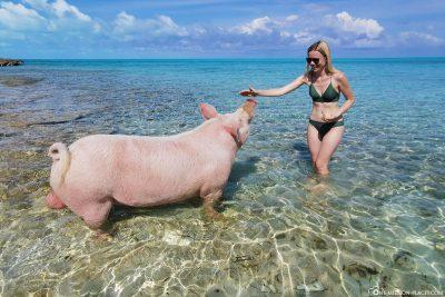 Ein großes Schwein im Wasser vor Long Island