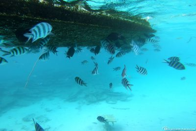 Ganz viele Fische am Boot