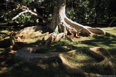 Eine riesige Wurzel