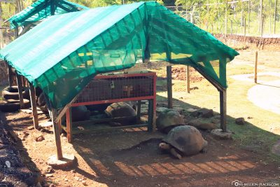 The enclosure of giant tortoises