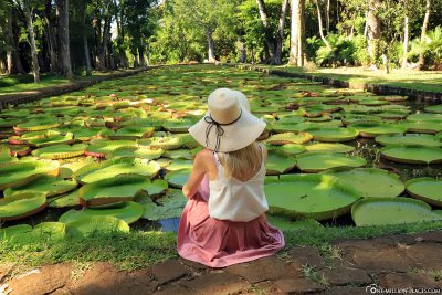 The large water lily pond in the Botanical Garden