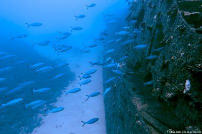 Tauchgang am Wrack der Stella Maru