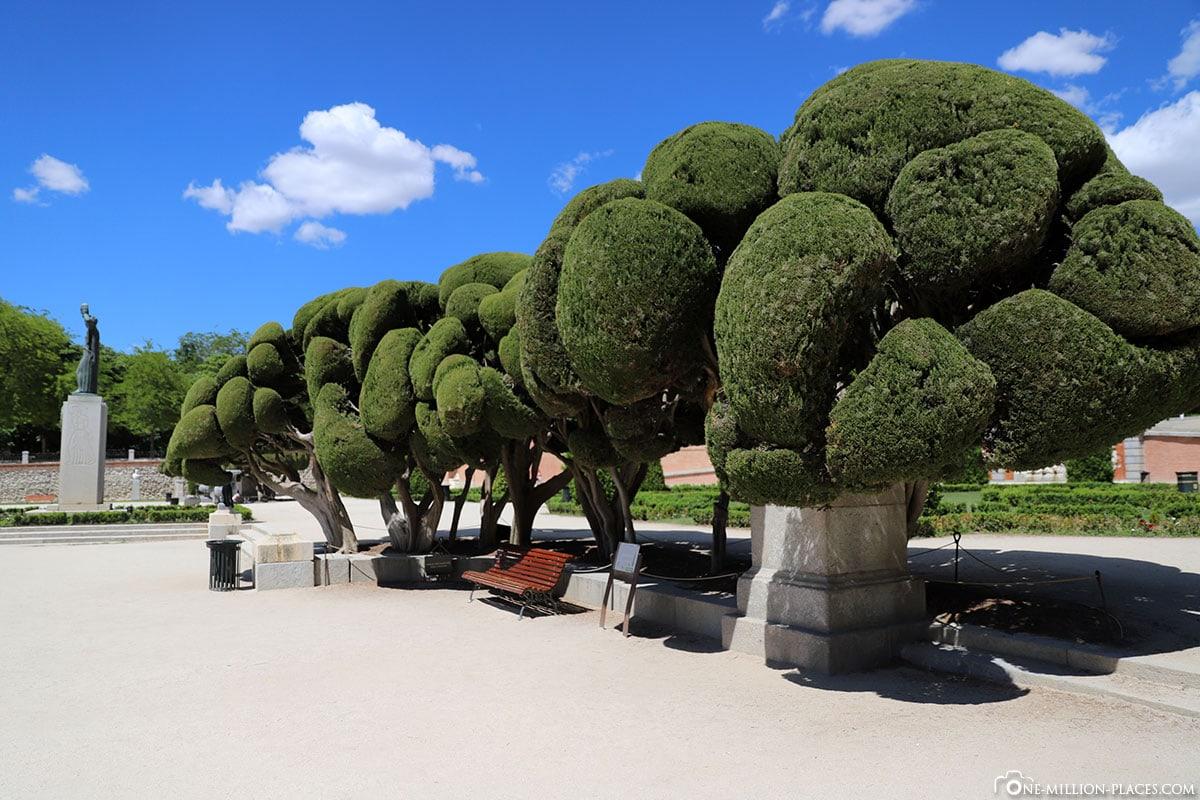 Zypressen, Bäume, Retiro Park, Madrid, Spanien, Sehenswürdigkeiten, Fotospots, Reisebericht