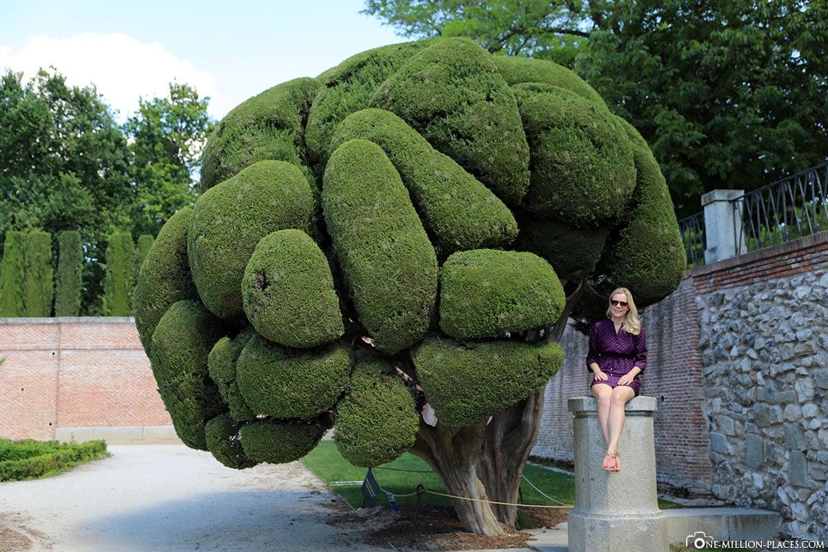 Runde Zypressen, Retiro Park, Madrid, Spanien, Sehenswürdigkeiten, Fotospots, Reisebericht