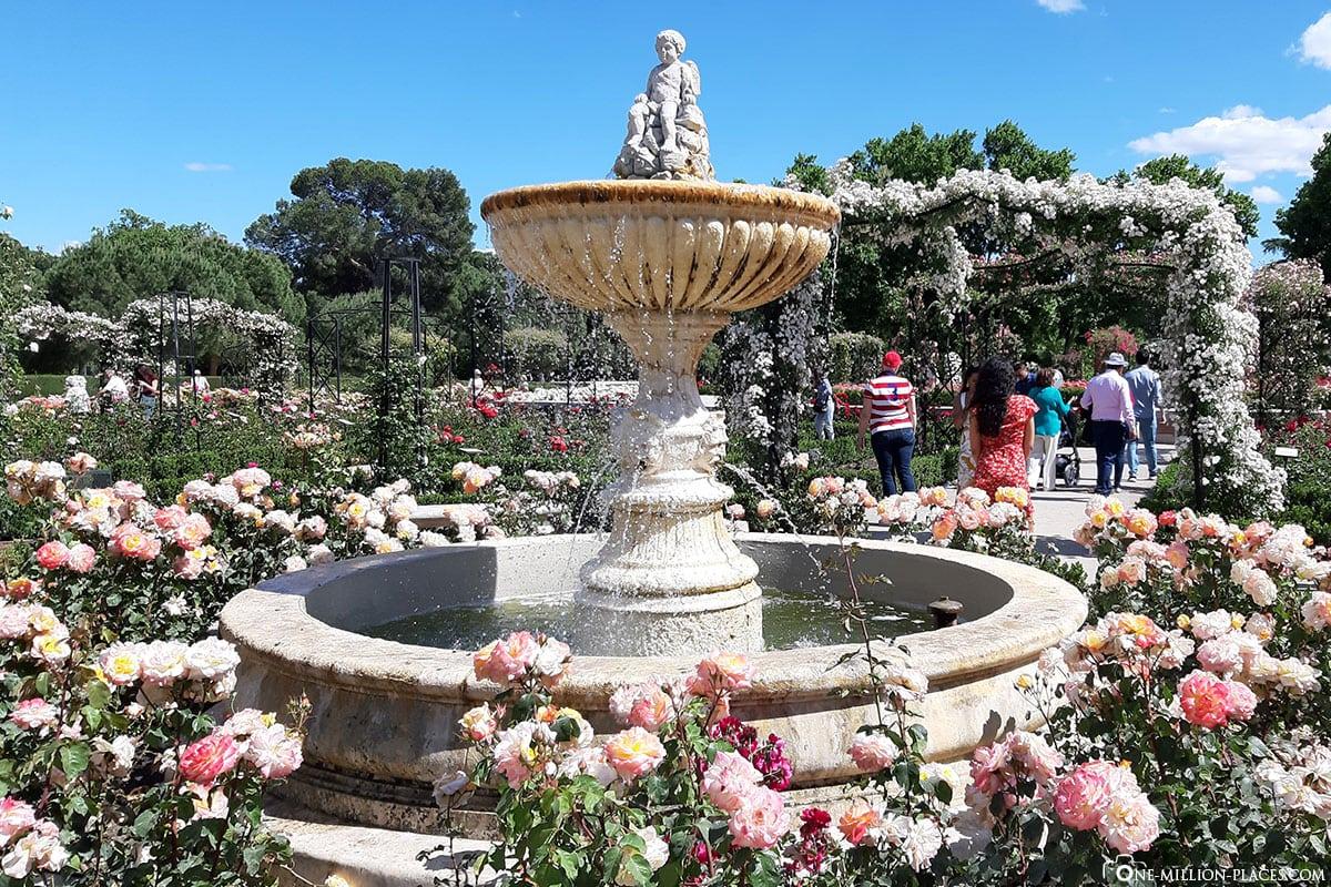 Retiro Park, Rosengarten, Madrid, Spanien, Sehenswürdigkeiten, Fotospots, Reisebericht