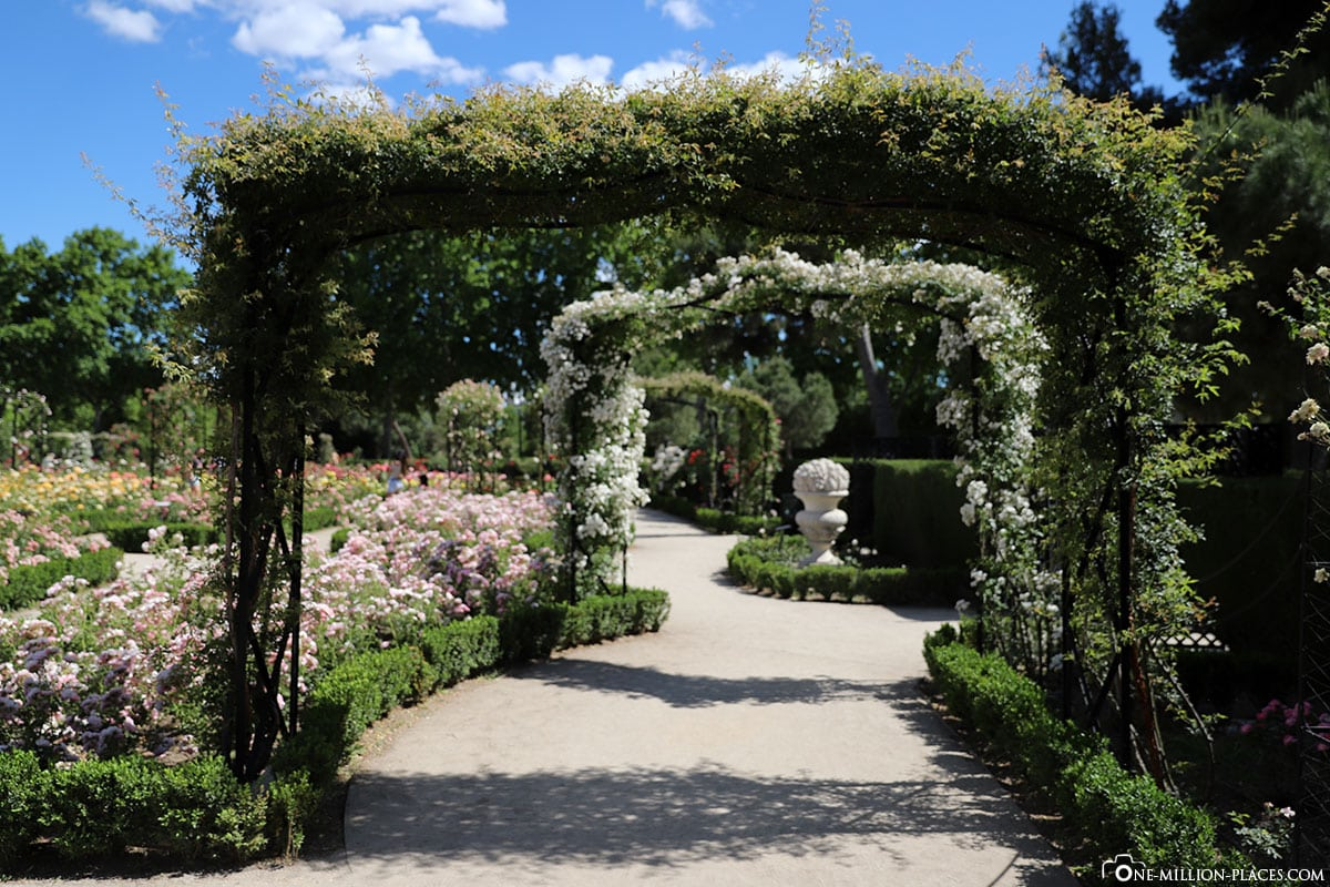 Rosengarten, Retiro Park, Madrid, Spanien, Sehenswürdigkeiten, Fotospots, Reisebericht