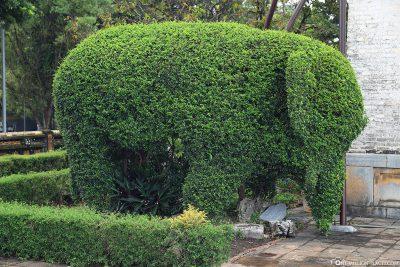 Formschnitt eines Elefanten
