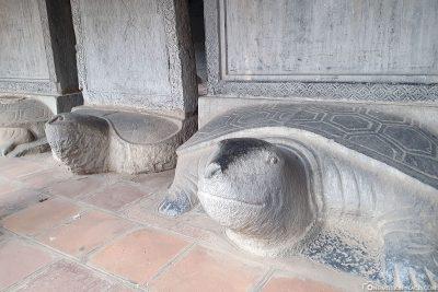 Test-specimen stilts based on turtle bodies