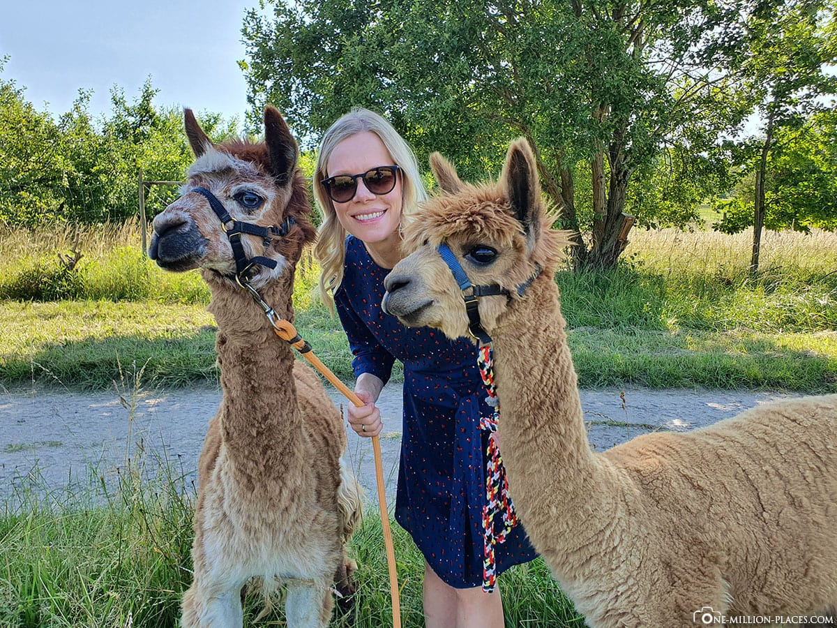 Hike with alpacas, alpaca farm Abayomi-Lieser, Moselle, sights, Rhineland-Palatinate, holiday in Germany, travel report