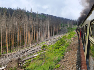The dead trees along the railway line