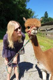 Hike with the alpacas