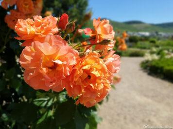 Der Garten im Kloster Machern