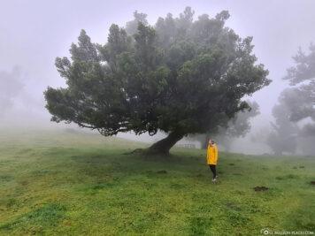Wanderung im Nebelwald von Madeira