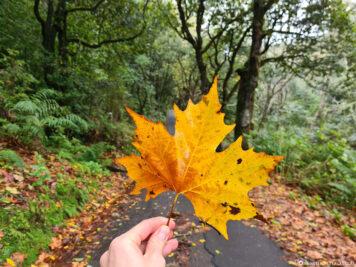 Herbst auf Madeira