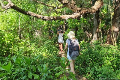 Hike through the jungle
