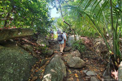 Hike through the jungle
