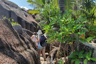 Through the jungle on the west coast of La Digue