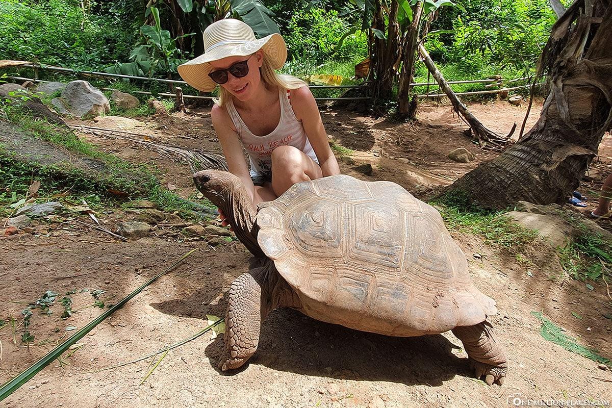 Riesenschildkröten, Cerf Island, Seychellen, Tour, Reisebericht