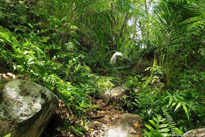 Wanderung durch den Wald