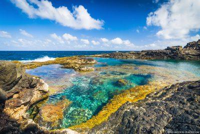 Rock Pool in Lanzarote
