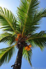 Eine schöne Palme