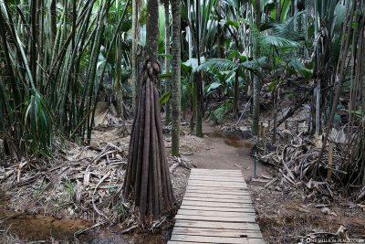 Hiking trail in the Vallée de Mai