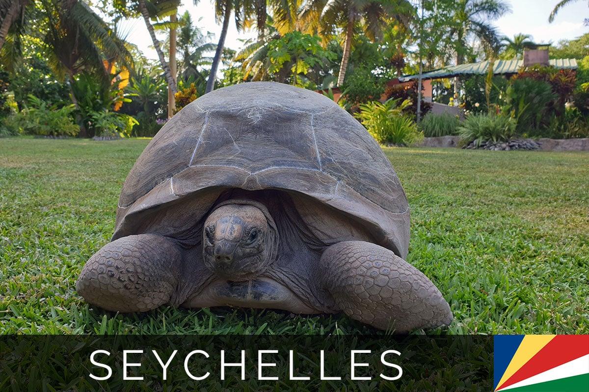 Seychelles La Digue Cat Cococ Blog Post